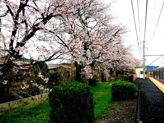 オルゴールの森美術館15|原田陽平旅行記
