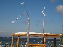 バリ島の写真その4-8|原田陽平の旅行記